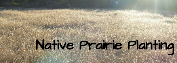 native prairie planting