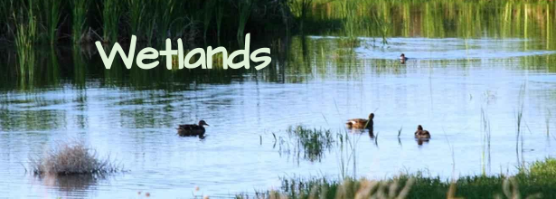 wetland services
